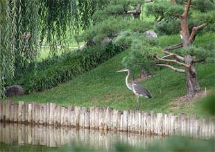 Heron in the Japanese Garden